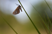 In the spotlight | H