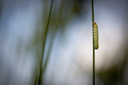 Caterpillar | Hatert
