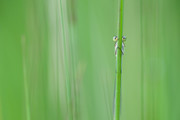 Hide and seek | Hate