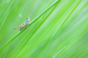Waking up the grassh