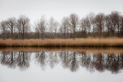 Reflections of natur