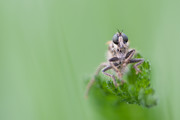 Watching you! | Wijc