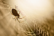 Spiderman | Hatertse