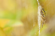Into the web | Hater