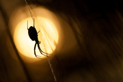 Highlighted | Hatert