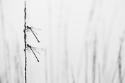 Together | De Kampin