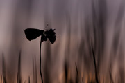 Colors at sunrise |