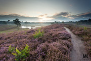 Heathland | Hatertse